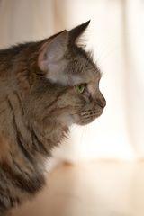Malin - eine Katze im/mit Profil