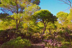 Mallorca-Heidebluete-im-Herbst