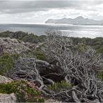 Mallorca - Küste bei Cala Rajada