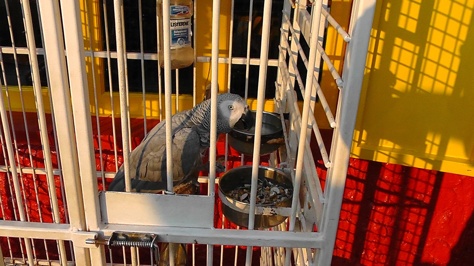 Mallorca- Papagei