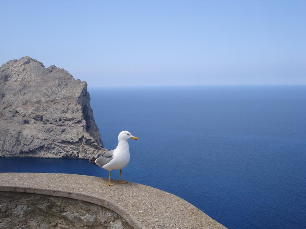 Mallorca und die Möwe