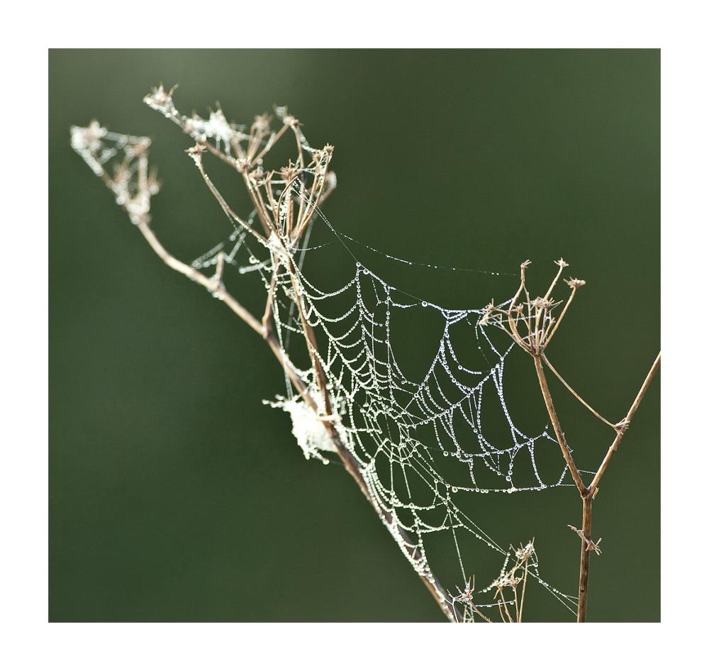 Mallorquinische Perlen