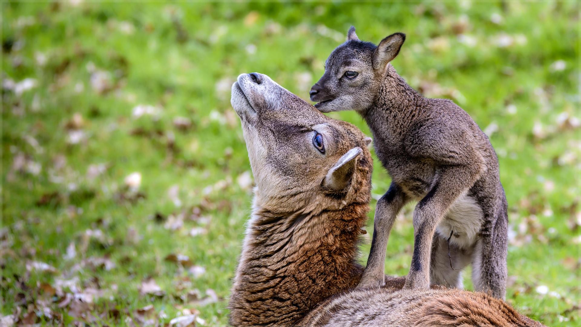 Mama, hab dich lieb!