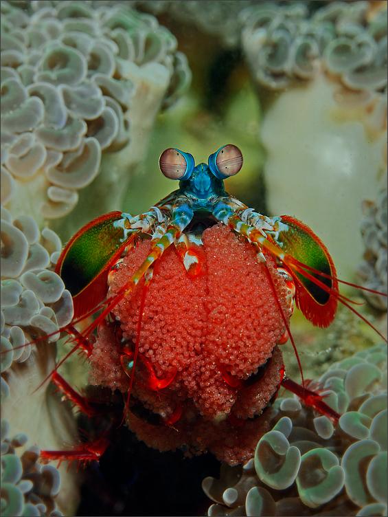 Mama Mantis