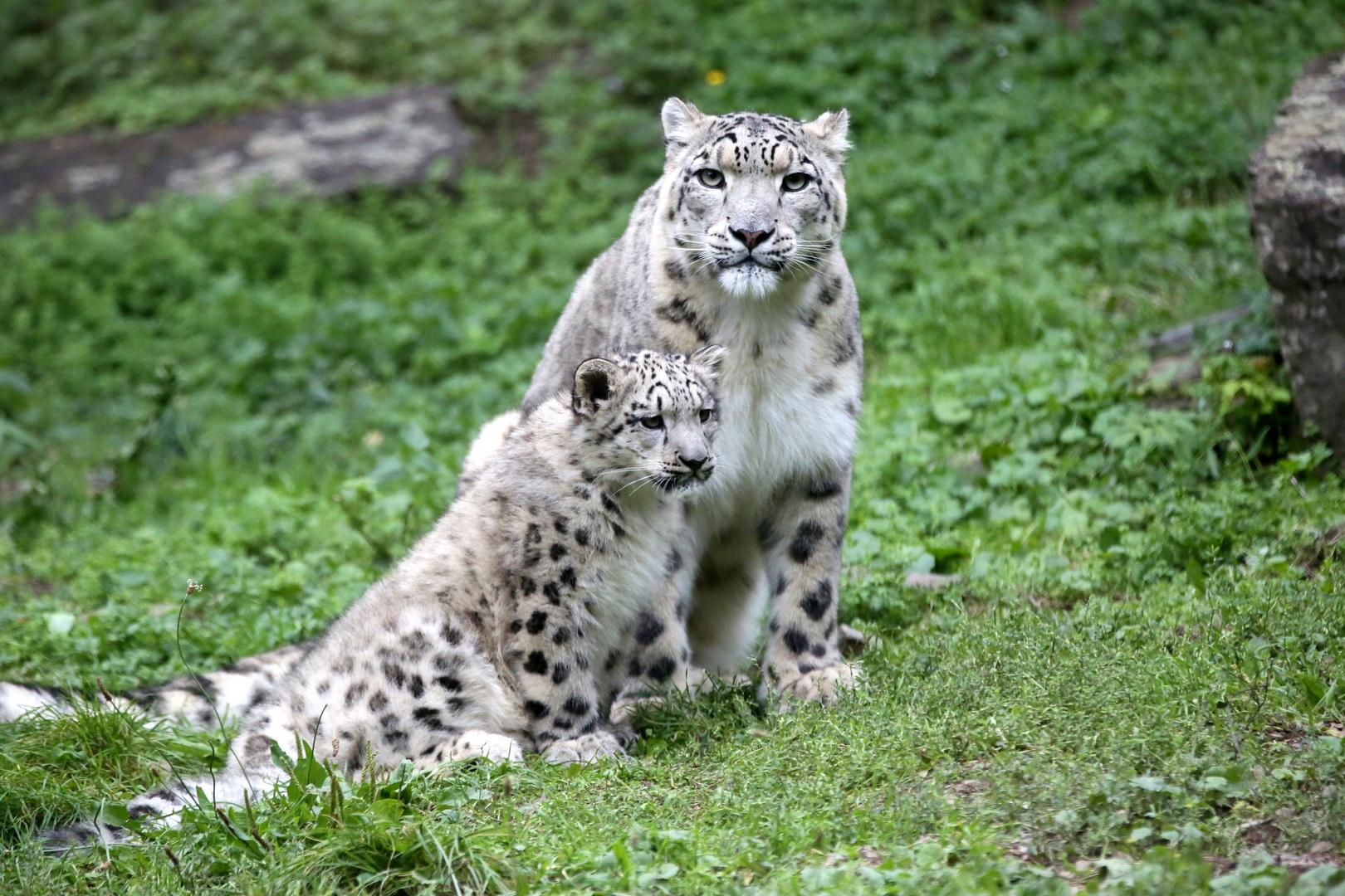 Mama und Sohn
