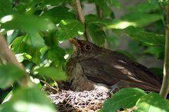 Mama Vogel bei der Arbeit #2