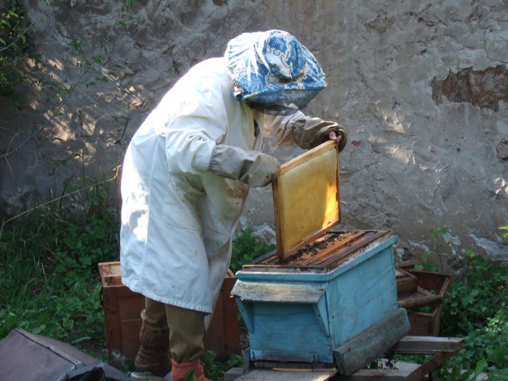 Maman et ses ruches
