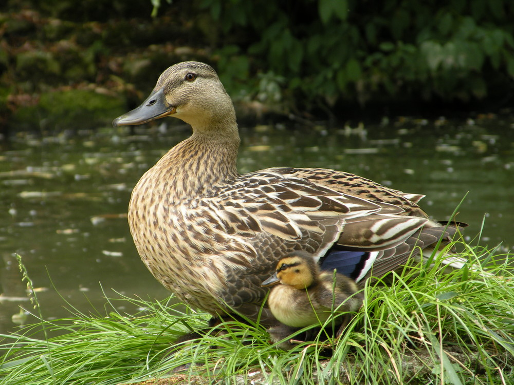 Maman et son petit.