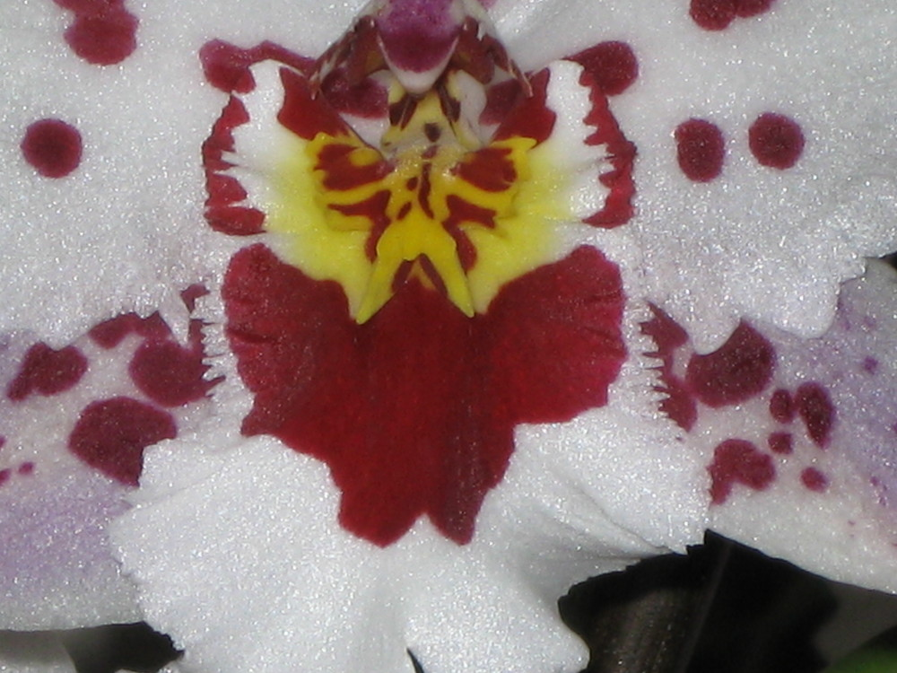 Mama´s Orchideen