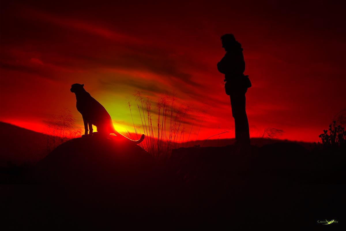Man and the Cheetah