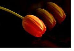 Man glaubt…die Worte treffen sie zum Blühen….