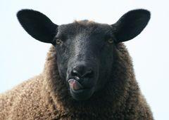 Man kann auch Schwarzes Schaf sein...