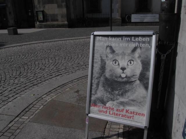 Kann Man Katzen Anstecken