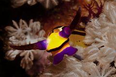 ..man nennt sie auch die Schmetterlinge der Meere...