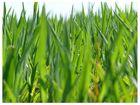 Man sieht das Gras vor lauter Halmen nicht...