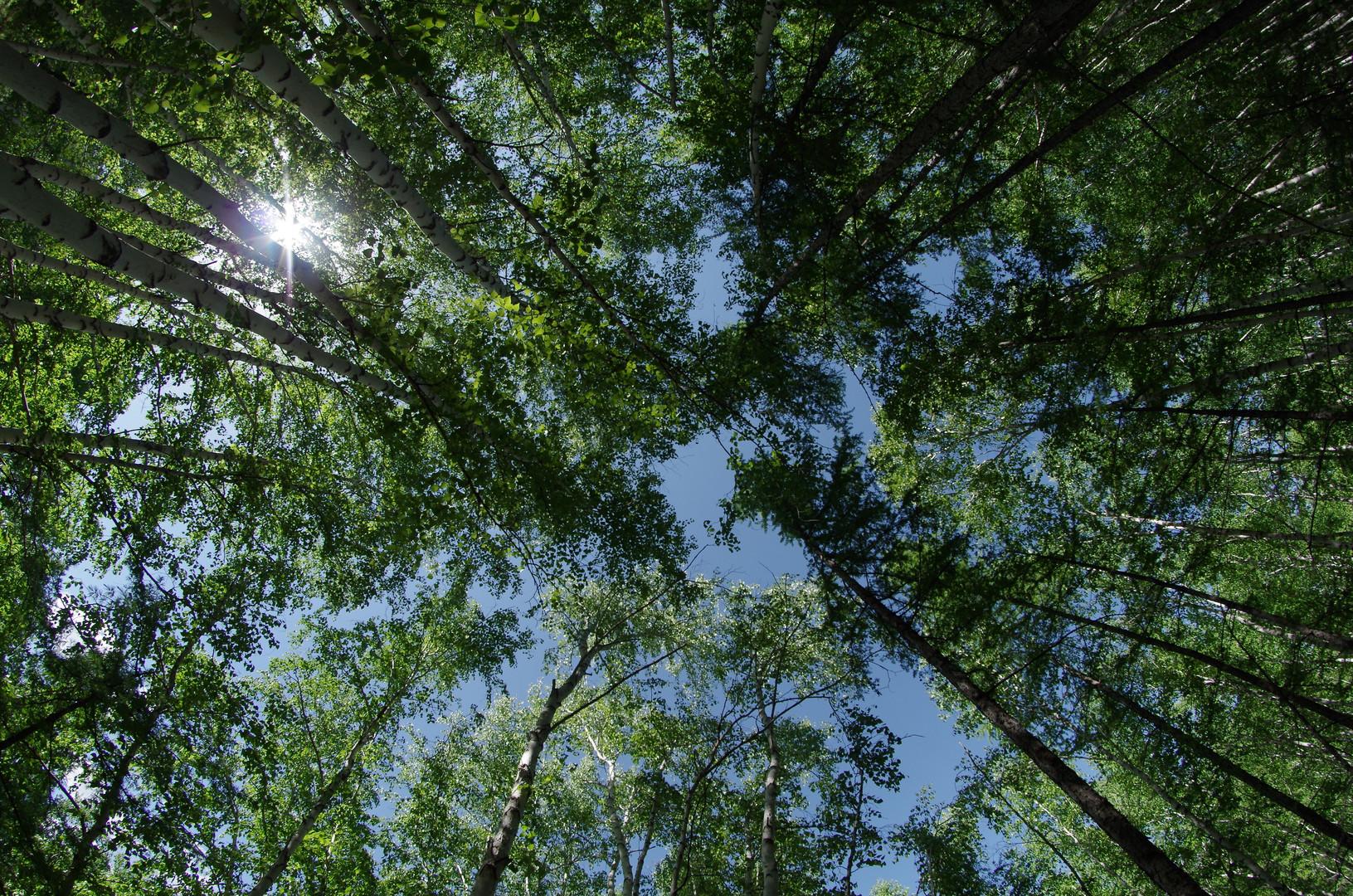 Man sieht den Baum vor lauter Wald nicht