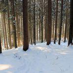 man sieht den Wald vor lauter Bäume nicht