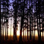 Man trifft sich im Wald