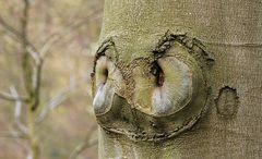 Manche Bäume haben Gesichter