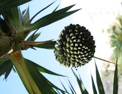 Manche Pflanzen haben schon ungewöhnliche Früchte!