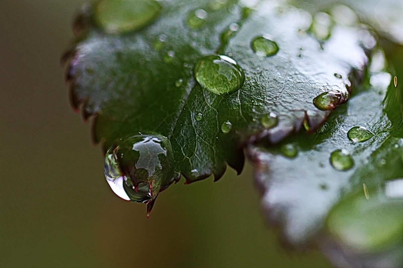manchmal bleibt nur der Regen