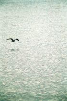 Manchmal fliegen wir alleine - und dennoch von so vielem umgeben...