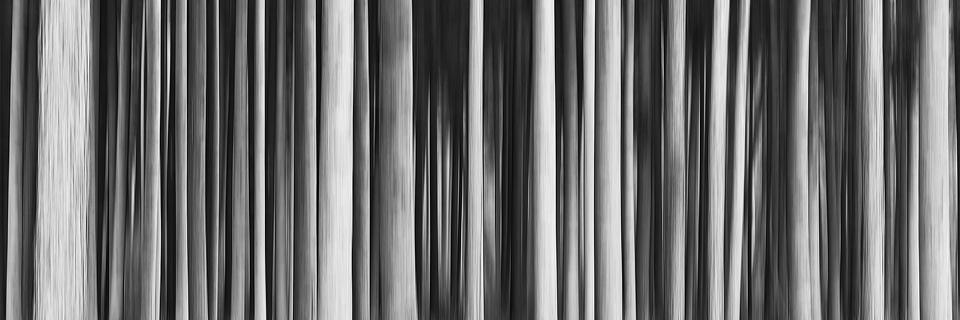 Manchmal seh ich den Wald vor lauter Bäumen nicht