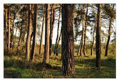 Manchmal sieht man den Wald vor lauter Bäumen nicht ...