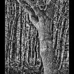 Manchmal sieht man vor lauter Wald....