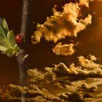 Manchmal wächst das Glück bis in den Himmel (A veces la suerte creciendo en el cielo)