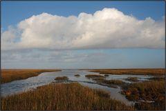 Mandø | tidal marshes |
