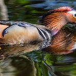 Mandarin-Spiegel