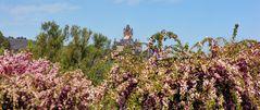 Mandelblüte an der Reichsburg Cochem
