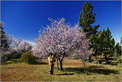 Mandelblüte bei Arguayo