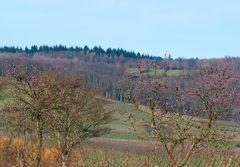 Mandelblüte im Rheingau am 6. Februar 2016