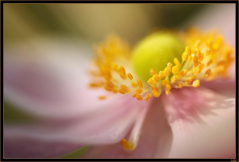 Manège floral