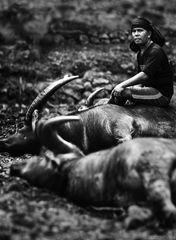 Manene ~ Tana Toraja