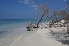 Mangroven - Cayo Levisa