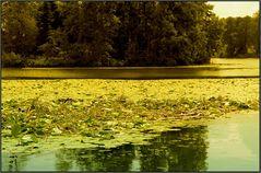 Mangroven in der Schweiz?