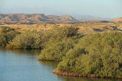 Mangroven Landschaft