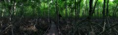 Mangroven Panorama