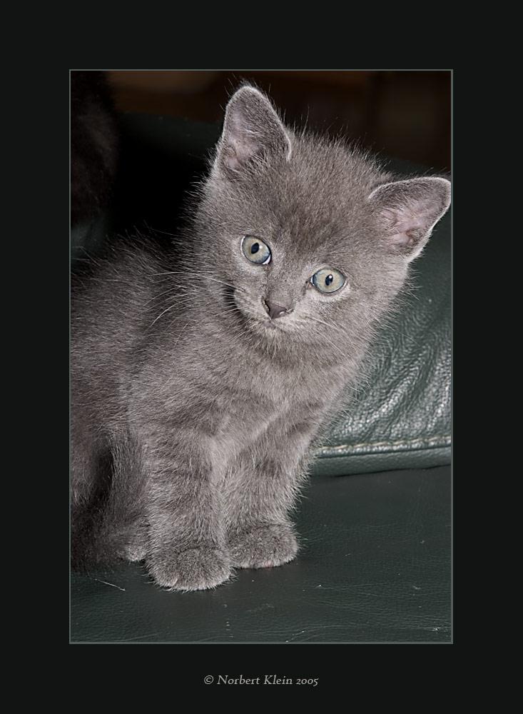 manis katzenbabys iv foto  bild  tiere haustiere