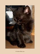 Manis Katzenbabys VIII