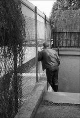 Mann mit Pfeife schaut durch ein kleines Loch im Zaun