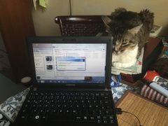 Manni passt auf die Computer auf
