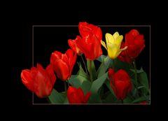 Manojo de tulipanes