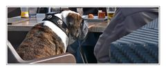 Man's best friend (Standcafe Groede)