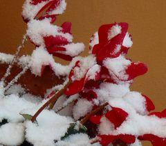 manteau de neige.....