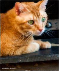 Mantel-Cat