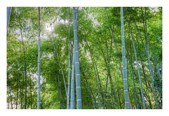 Many bamboo